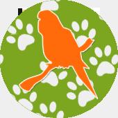 Для мелких и средних попугаев