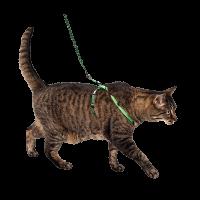 Комплект шлейка  д-кошек капрон