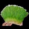 Зелёный корм