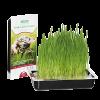Трава  д-кошек в лотке  Тит-Бит