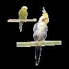 Penn-Plax Жердочка д-птиц 20*4см минеральная (82899)