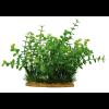 """Иск. растение ArtUniq """"Бакопа"""" 15 см (ART1160115)"""