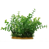 Аквадекор  ArtUniq иск. растение Бакопа 15см (ART1160115)