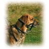 TRIXIE Намордник тренировочный д-собак XL 49см динна повод. 54-66см (13006)