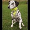 TRIXIE Бандана д-собак со светоотраж.рисунком  M-L  45*23см (30122)