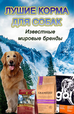 Баннер Лучший корм для собак